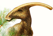Illustration of Parasaurolophus dinosaur chewing a branch