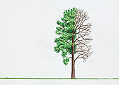 Illustration of Poplar (Populus) tree with green leaves and bare branches