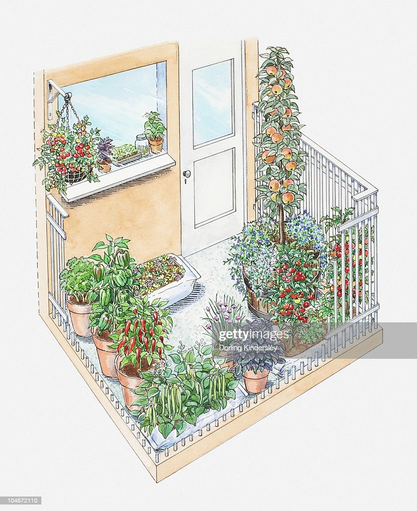 Illustration of potted herbs and fruit trees on a small patio area : Stock Illustration