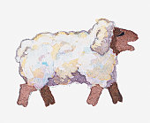 Illustration of sheep bleating