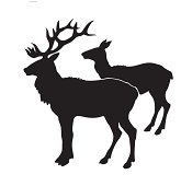 illustration of the deers on white background