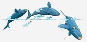 Illustration of whales and flying fish breaching
