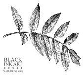 Graphic drawing, pointillism technique. Floral element for design