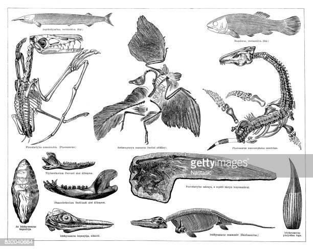 Jurassic fossils