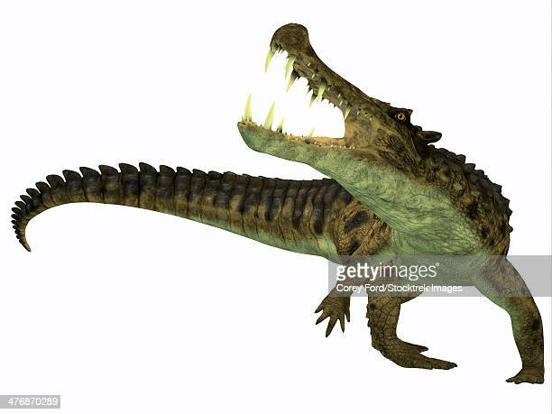 Kaprosuchus is an extinct genus of crocodile from the Upper Cretaceous of Niger, Africa.