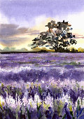 Lavender field and tree. Watercolor illustration.