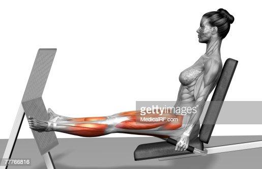 Leg Press Stock Illustration | Getty Images