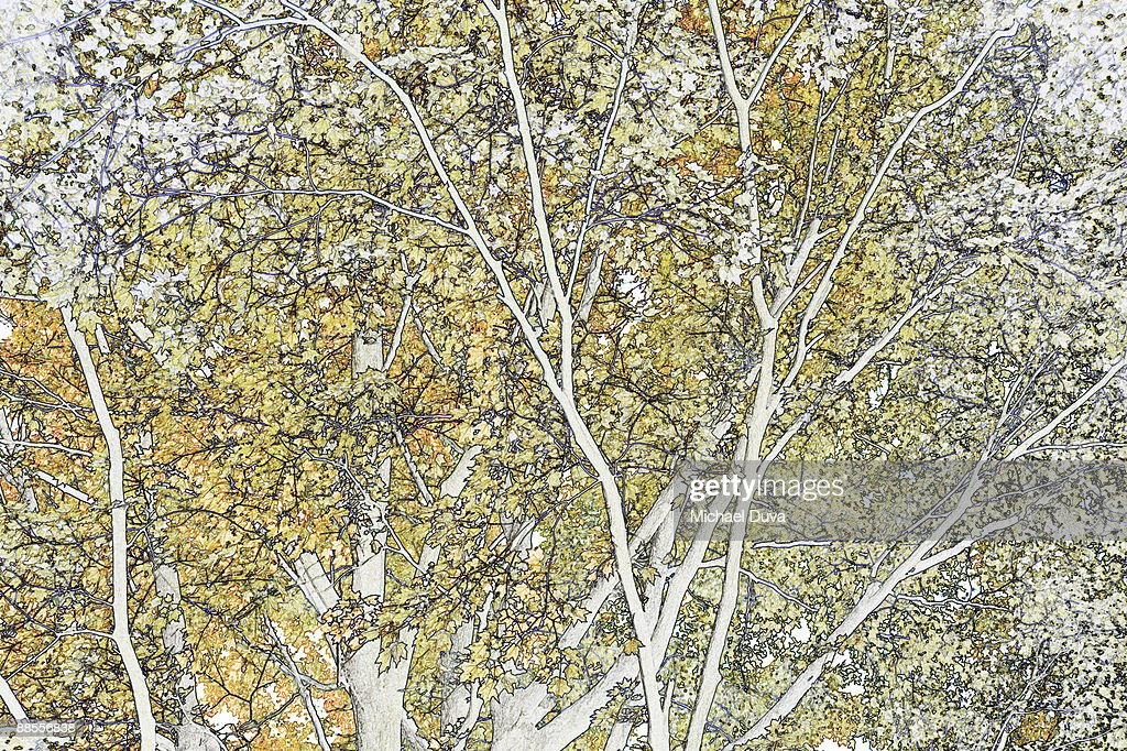 line drawing of foliage, leaves and trees in fall : Stock Illustration