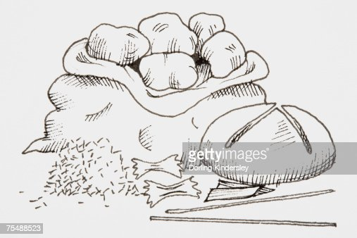 Line Drawing Food : Line drawing of foods that provide carbohydrates including