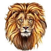 king lion head digital painting