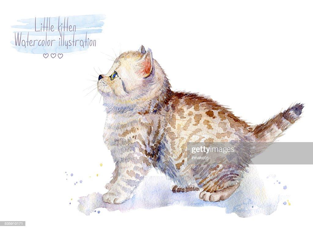 Little fluffy kitten.  Spotted cat. : Stock Illustration