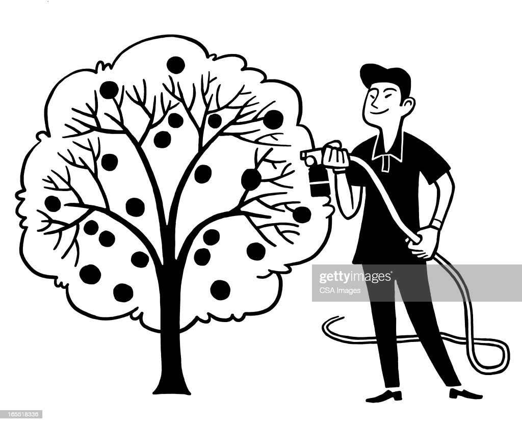 Man Watering a Fruit Tree : Stock Illustration