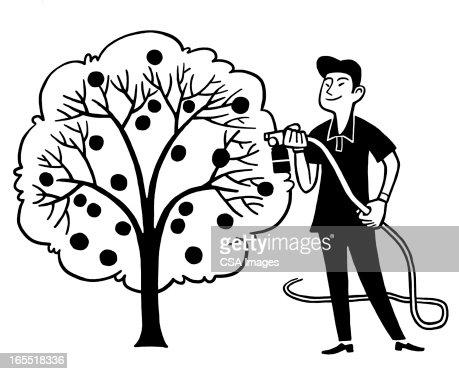 Man Watering a Fruit Tree : Stock Illustration