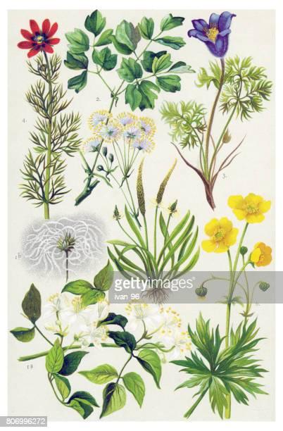 Plantes médicinales et aux herbes