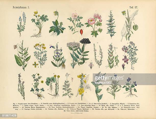 Medicinal and Herbal Plants, Victorian Botanical Illustration