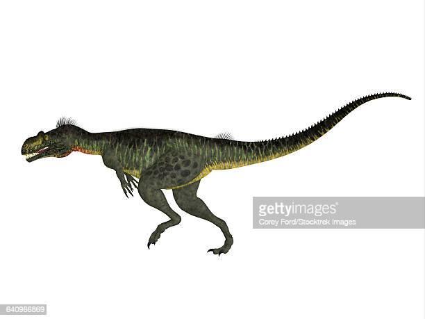 Illustrazioni e cartoni animati stock di celurosauri