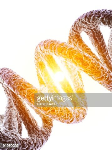 DNA (Deoxyribonucleic Acid) molecule : Stock Illustration
