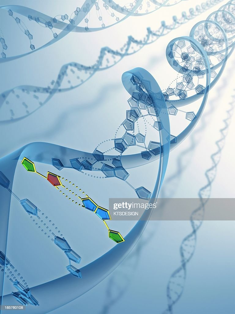 DNA molecules, artwork : Stock Illustration