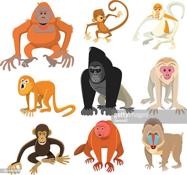 Monkey or Primate Collection
