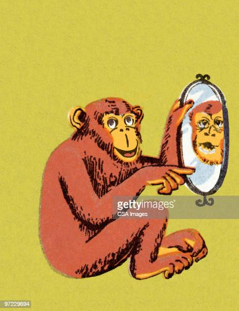 Monkey Pointing to Reflection in Mirror