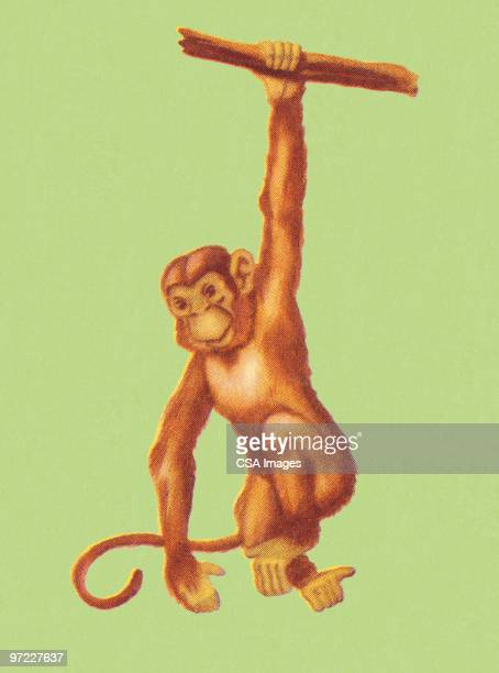 Monkey Swinging from a Branch