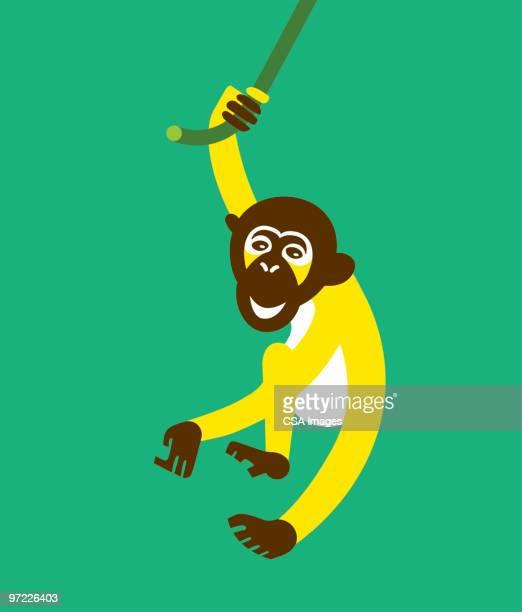 Monkey Swinging on Vine