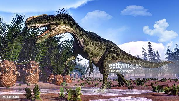 A Monolophosaurus dinosaur walking amongst cycas and calamites.
