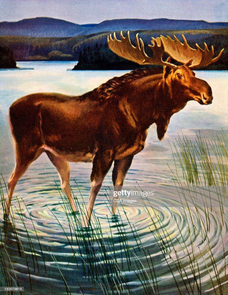 moose lake online dating Minnesota correctional facility - moose lake 1000 lake shore drive moose lake, mn 55767 218-485-5000 nateknutson@statemnus get directions.