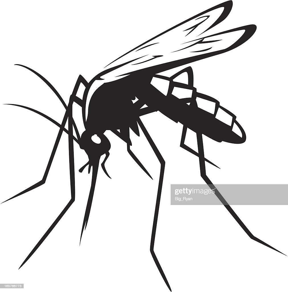 mosquito graphic vector art getty images