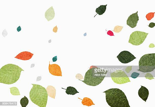 Multi colored leaves falling over white background