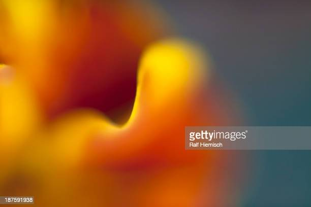 Multicolored abstract light