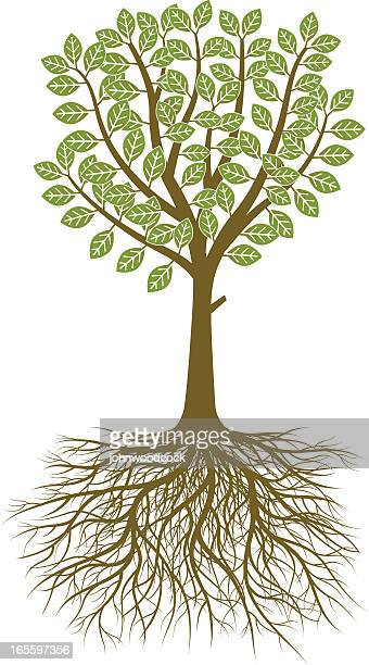Naive tree and roots