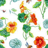 Seamless watercolor floral pattern. Nasturtium and bee, watercolor pattern on a white background.