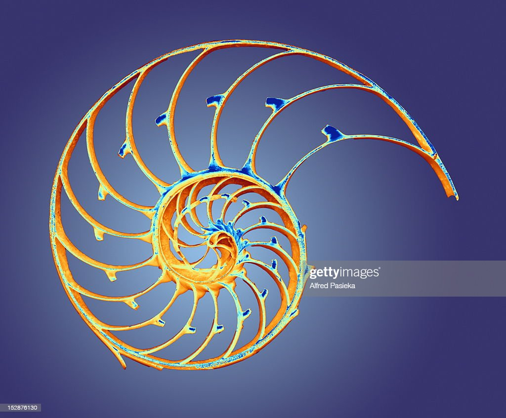Nautilus shell : Stock Illustration