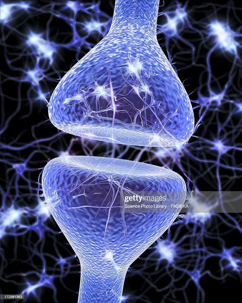 Nerve Synapse Nerve Synapse Artwork ...