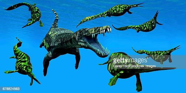 A Nothosaurus marine reptile attacks a pod of Hupehsuchus dinosaurs.