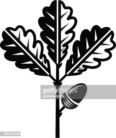 Oak Leaf And Acorn Drawing Oak Leaf And Acorn Vec...