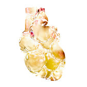 Obese heart conceptual image, 3D illustration showing heart silhouette made from fatty cells