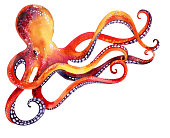 watercolor octopus isolated on white background. Hand painted illustration