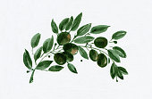 freehand drawing, watercolor, Olive branch, my style, graphic elements, design elements