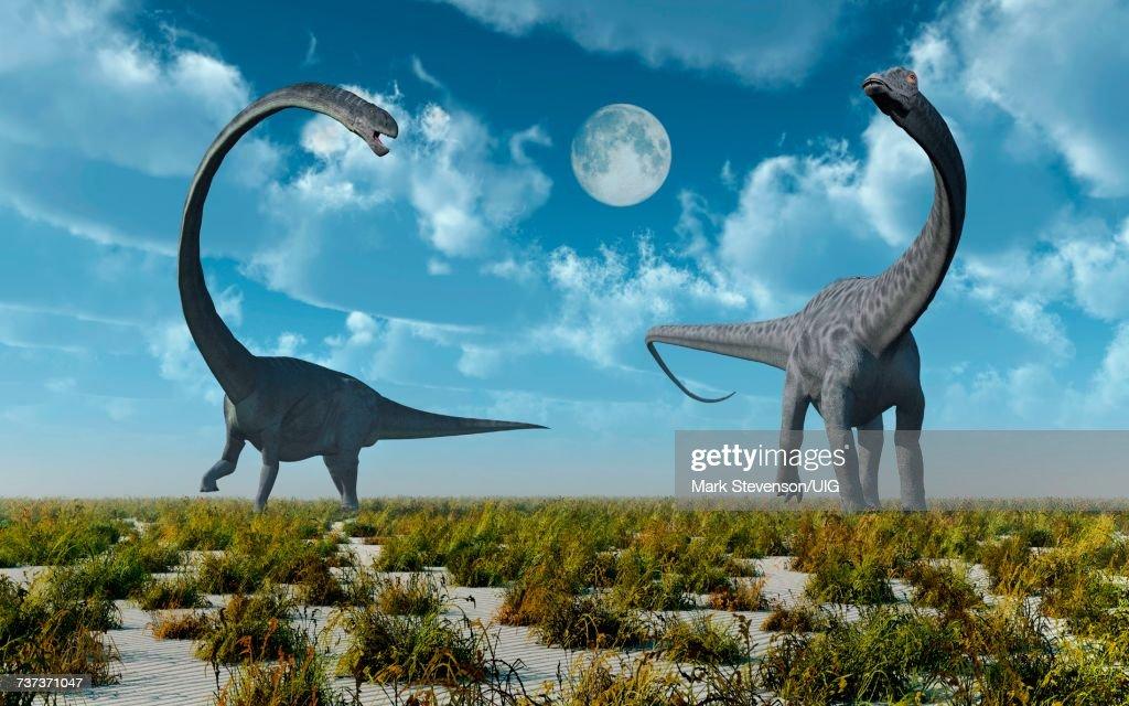 Omeisaurus & Diplodocus Sauropod Dinosaurs. : Stock Illustration