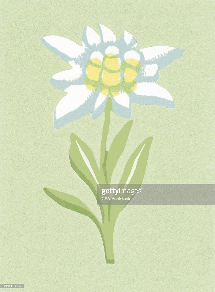 One Flower : Stock Illustration