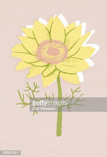Una sola flor : Ilustración de stock