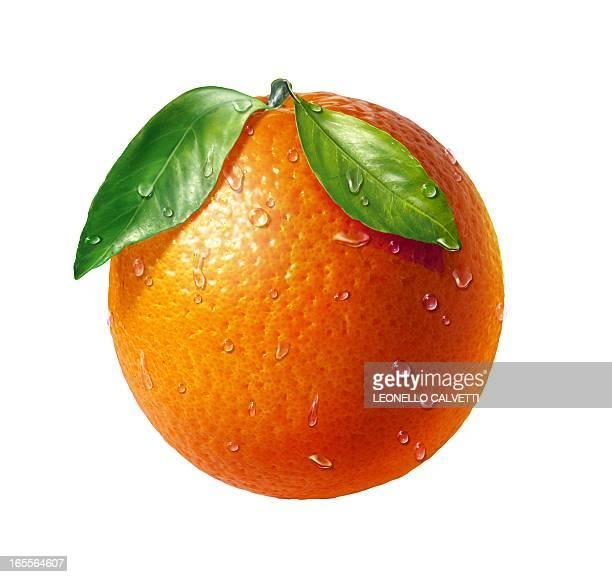 Orange, artwork
