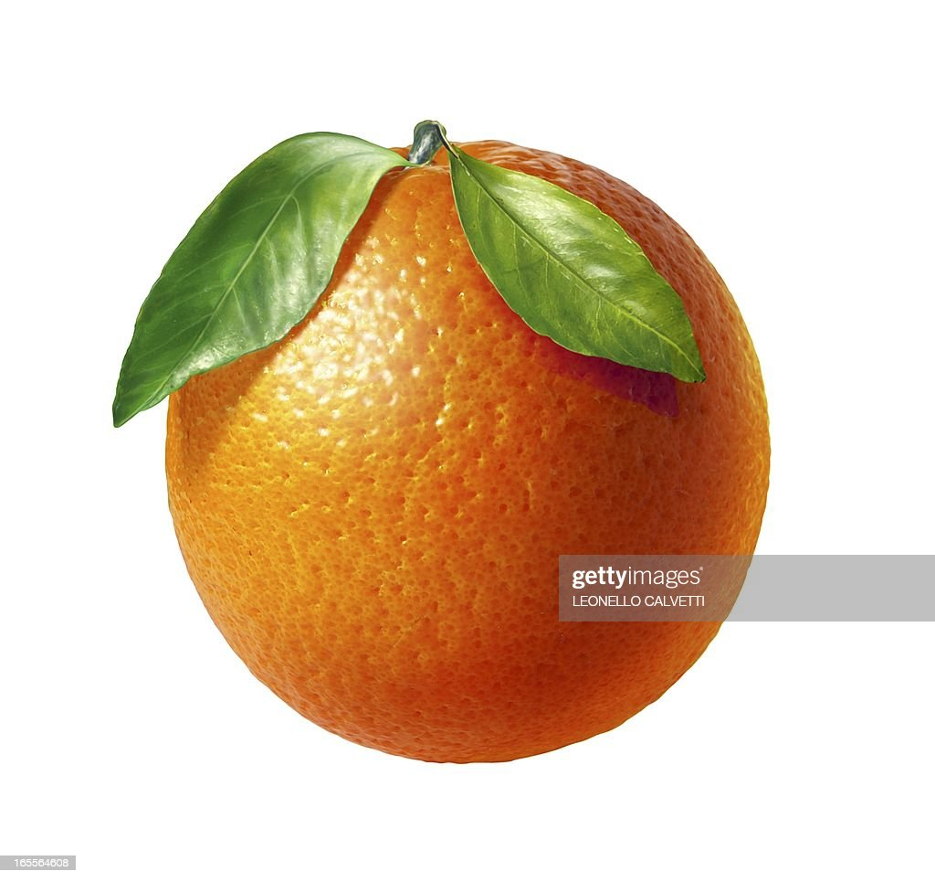 Orange, artwork : Stock Illustration