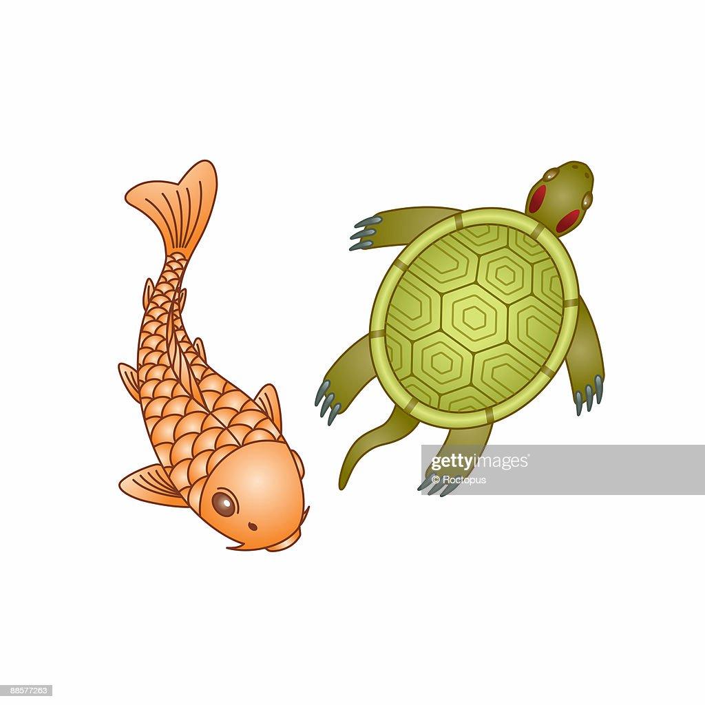 Ornamental koi carp and red eared turtle illustration for Decorative carp