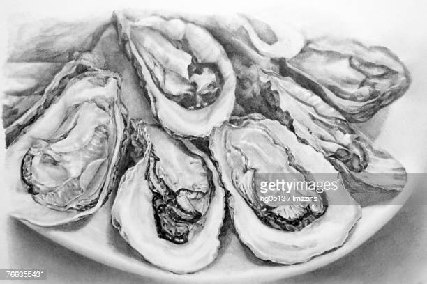 Oyster pencil drawing