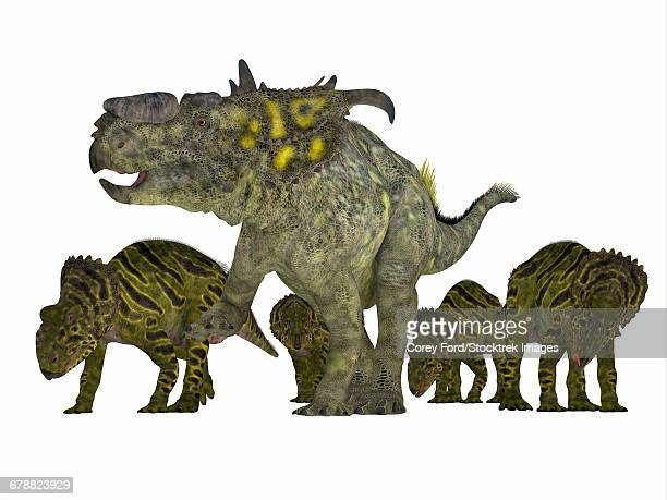 Triceratops Rhino Dinosaurs Sticker Collection Set – stock ...