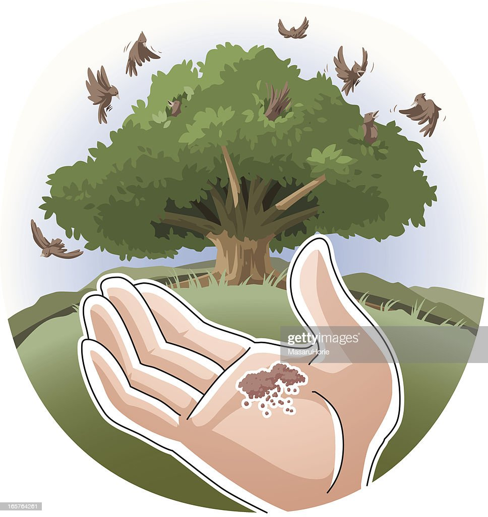 parable of the mustard seed vector art getty images