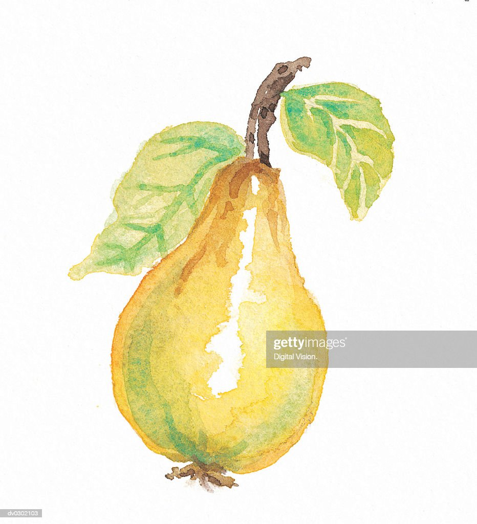 Pear : Stock Illustration
